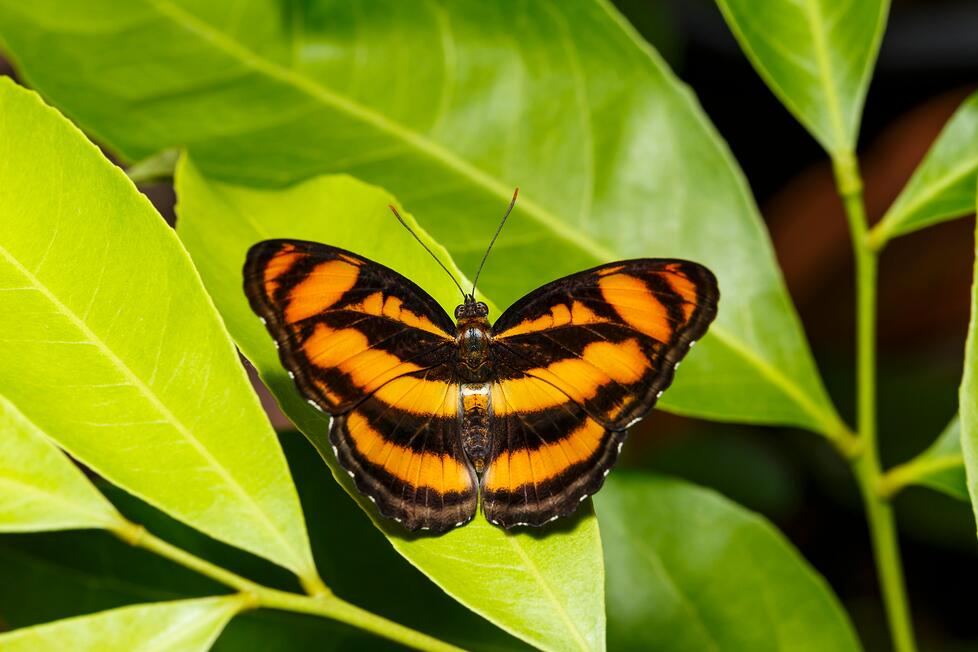 butterfly- JConnelly blog- how to assemble a rebrand team